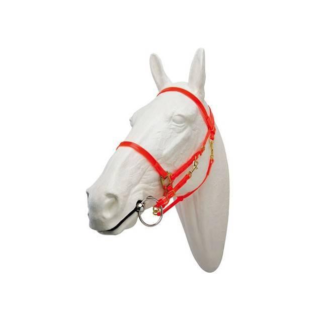 cabezada raid, cabezada caballo, cabezada